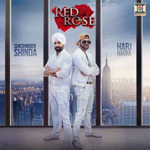harj-nagra-shinda-red-rose